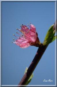fleur de péché